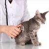 Ветеринарные клиники в Мухоршибири